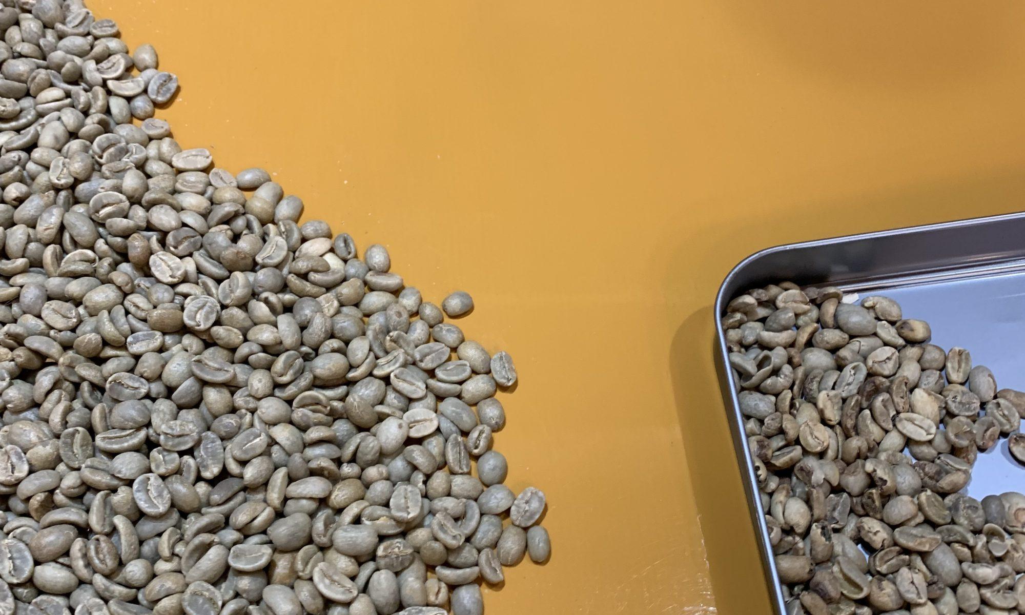 コーヒー豆ハンドピック